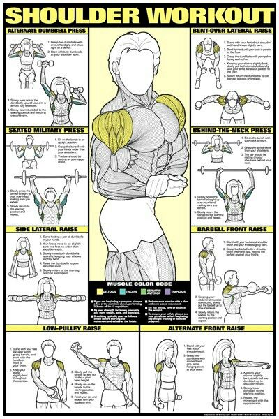 Gym Workout Chart For Men Also Thevillas Rh