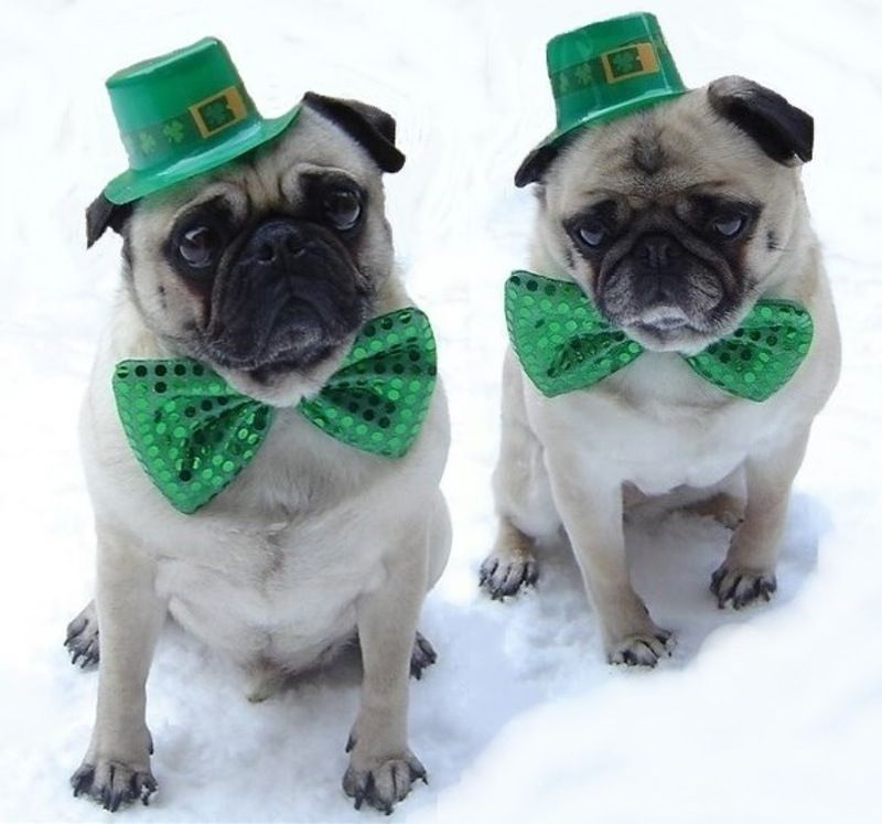7 Funny St. Patrick's Day Quotes To Get You In The Spirit To Celebrate