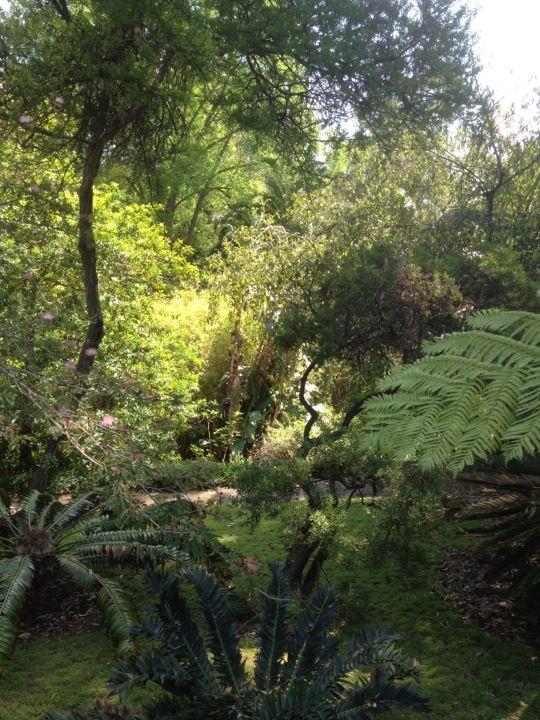 Ucla Mildred E Mathias Botanical Garden Botanical Gardens