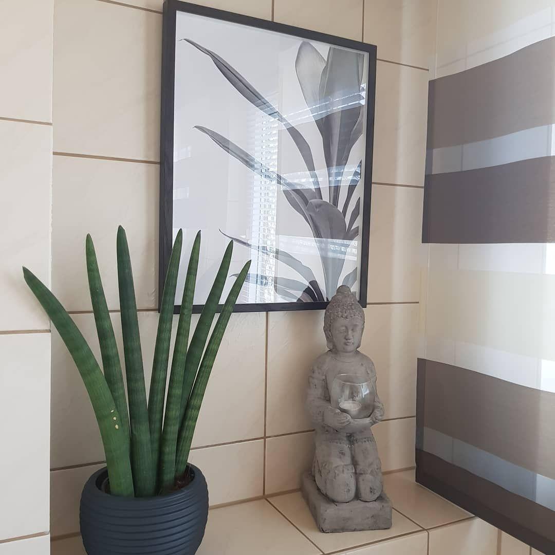 Bathroom Pflanzenliebe Sansiveria Badezimmer Badezimmerdeko Badezimmer Decoration Solebenwir Homesweethome Deco Decorationideas Buddha Wohnenunddekorieren Home