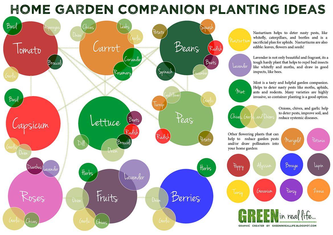Ideas For The Home Garden Companion Planting Companion 400 x 300