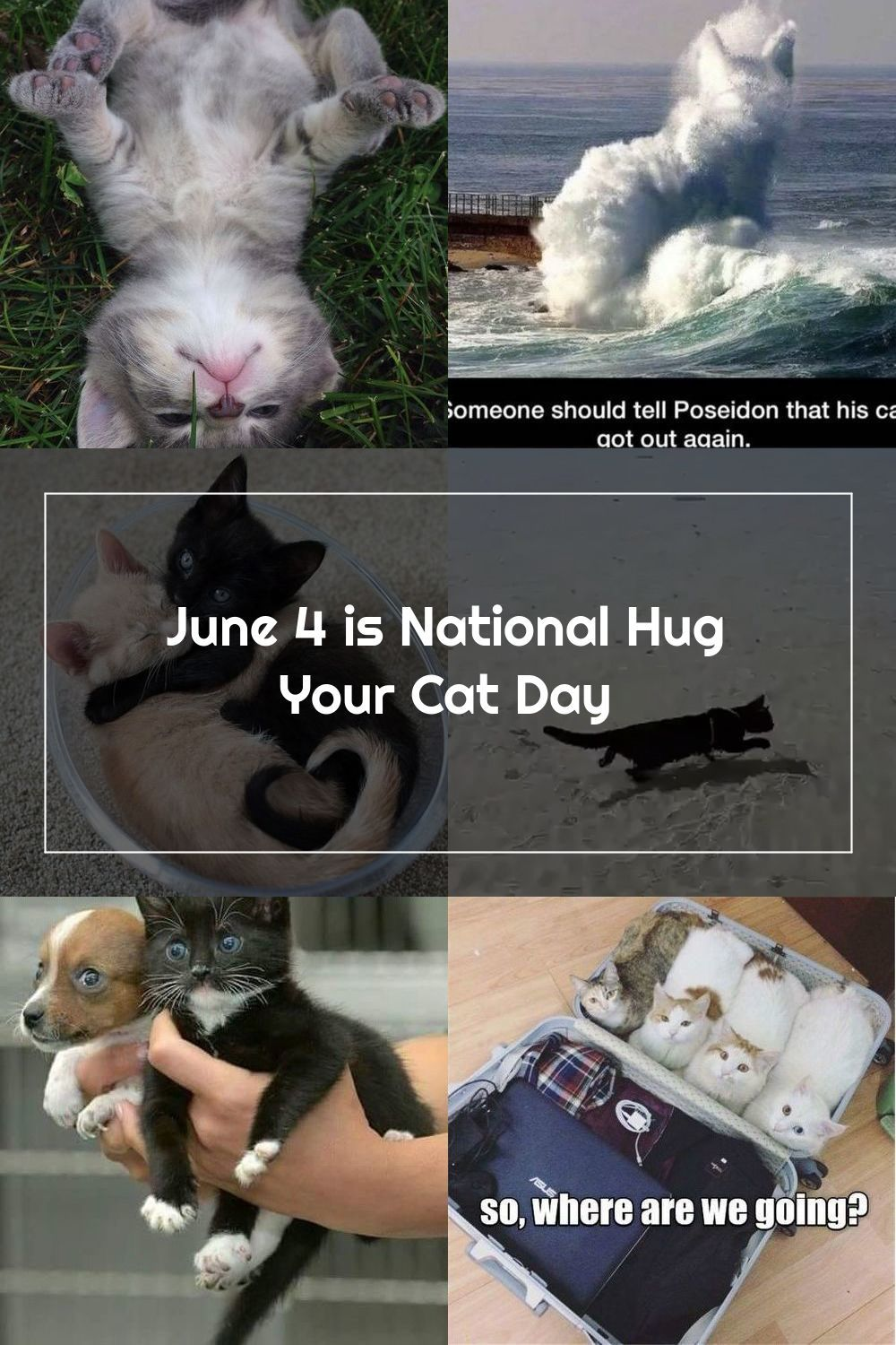 National Hug Your Cat Day is celebrated by giving your