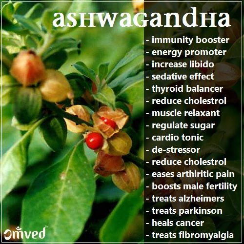 Benefits of ashwagandha  According to my research, these