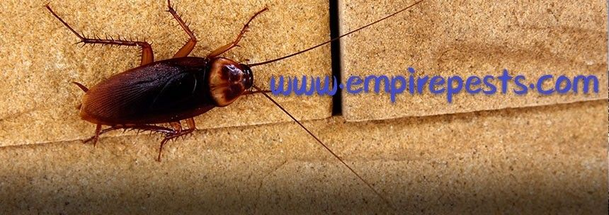 For leading pest control services in the toronto call