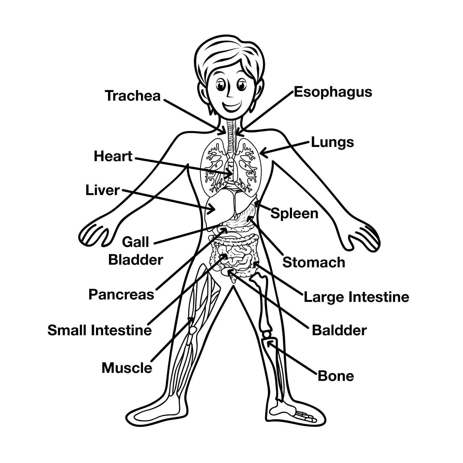 Human Body Diagram For Kids  Health, Medicine and Anatomy