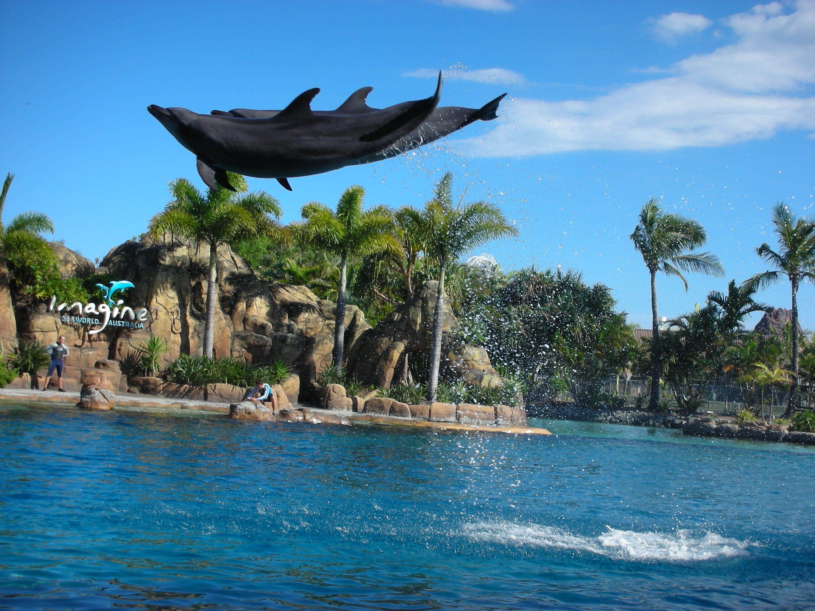 See the dolphins play at SeaWorld in Gold Coast Australia http