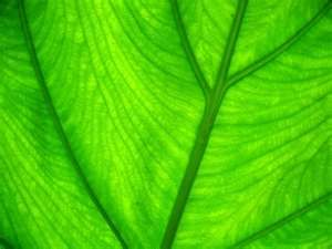 Anything green I love