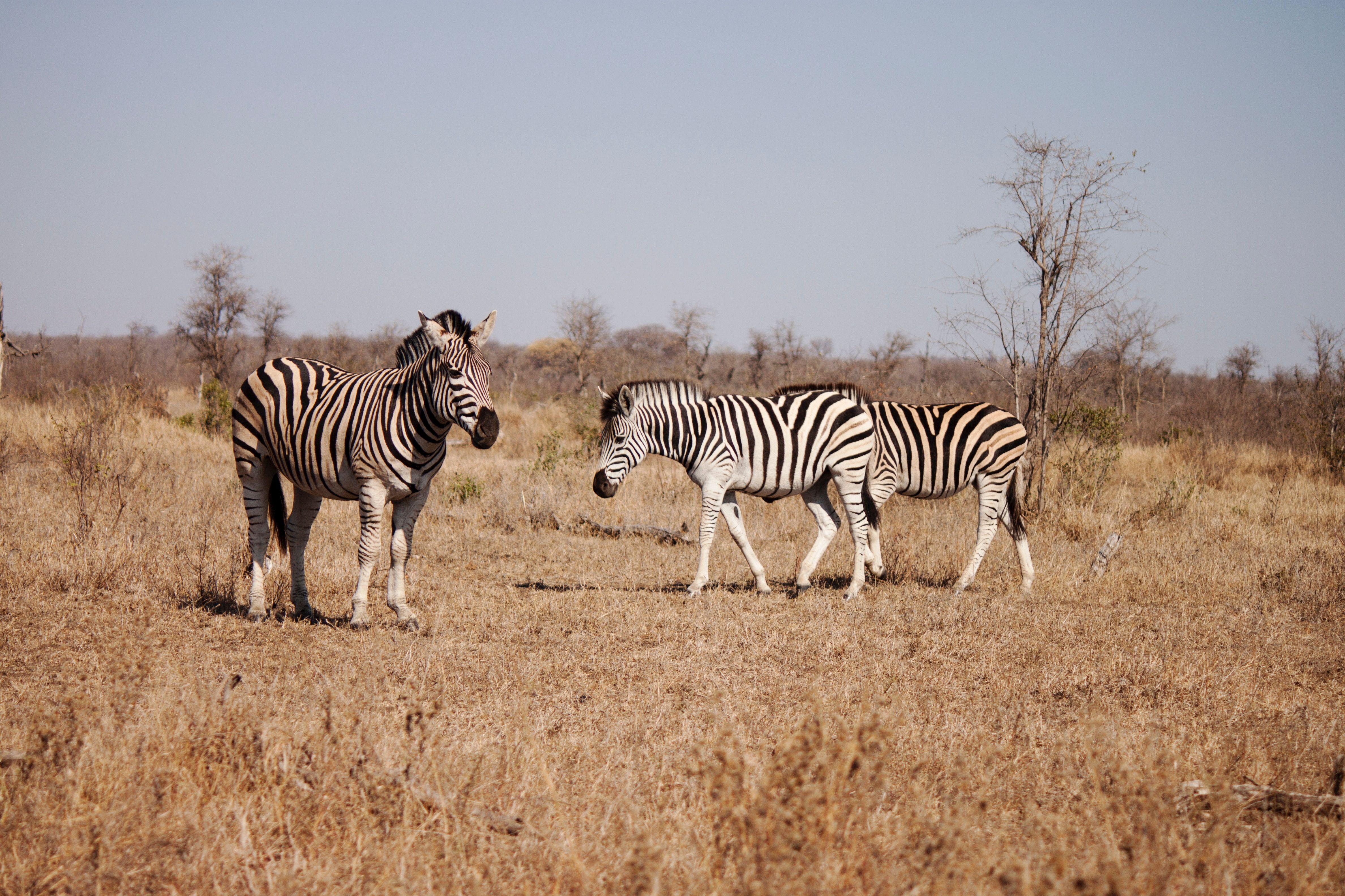 Pin Auf Sudafrika Mosambik Fur Abenteuerer Taucher