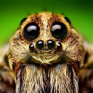 I'm proud of myself; I can look at a spider's face and not cry out of fear! I can appreciate the beauty in it!:)
