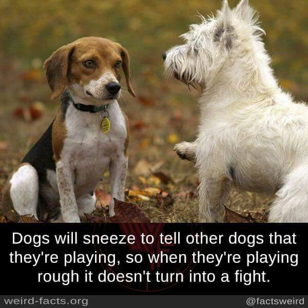 I Don T Know That But Still My Dogs Fight For Food Even They