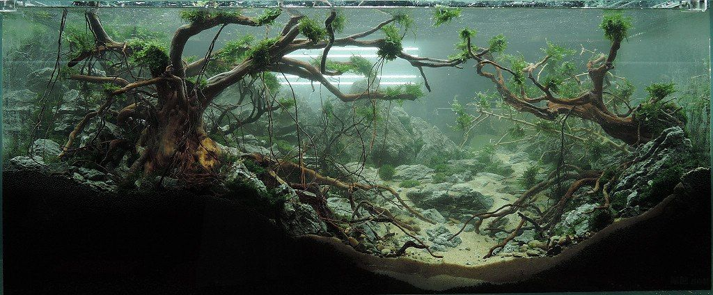 Aquascaping · Chinese Live Scaping Contest