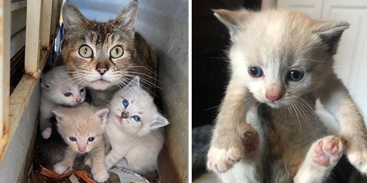 Cat Shields Her Kittens In Backyard Until Help Arrives Love Meow