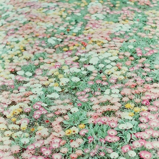 Reminds me of the Wizard Of Oz's field of flowers that put Dorothy to sleep...
