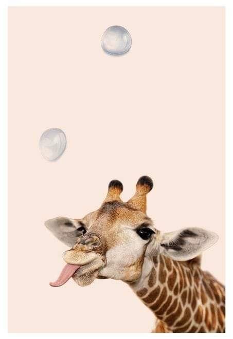 Hintergrundbilder Lustige Tiere