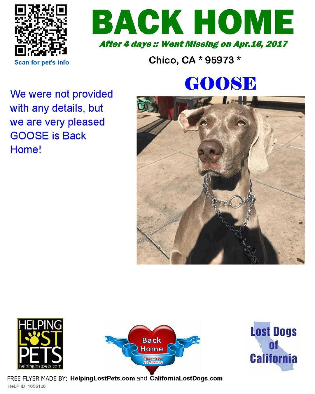 We Are Very Happy To Report Goose Is Back Home After 4 Days Welcome Home Goose Reunited Lostdogsca Helpinglostpets Help Id Losing A Dog Losing A Pet Dogs