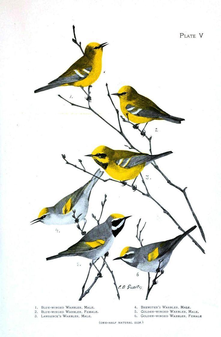 """Résultat de recherche d'images pour """"livre sur les plumes d'oiseaux"""""""