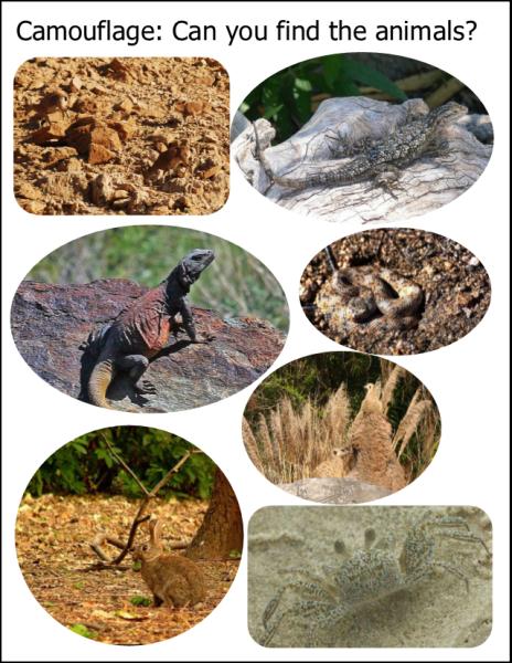 Animal Habitats Inventors of Tomorrow Animal habitats