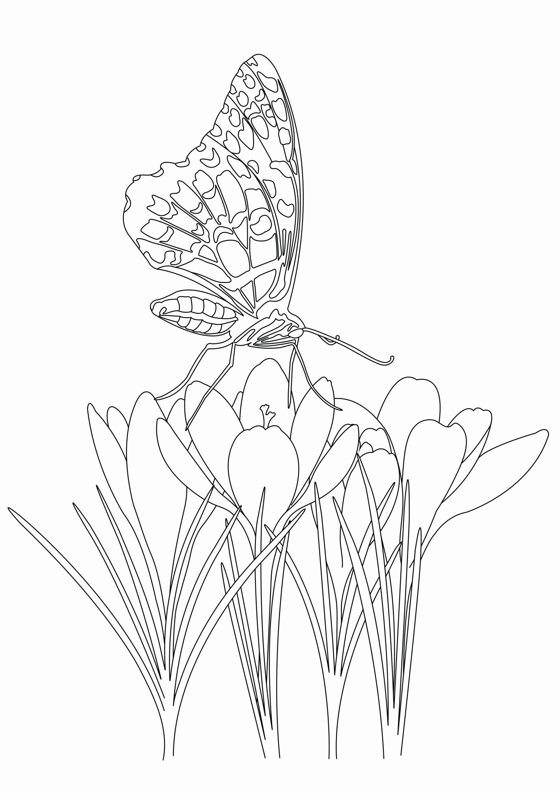 Coloring Book Flowers And Butterflies Inspirational Butterfly Under Flowers From The Color Animal Coloring Pages Butterfly Coloring Page Mandala Coloring Pages