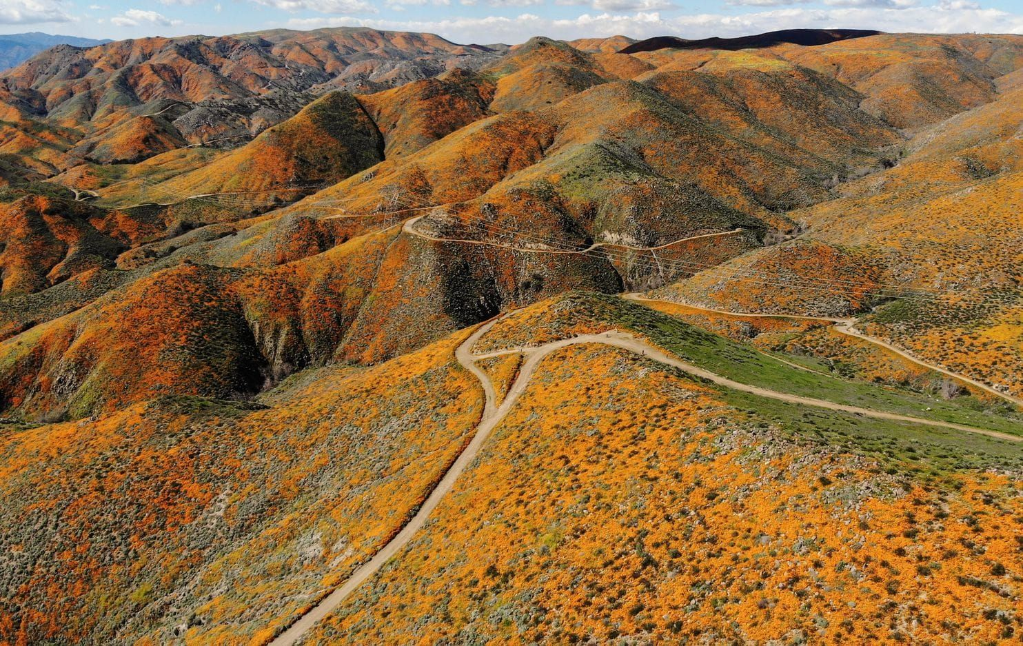 California's super bloom is the best in years, so vibrant