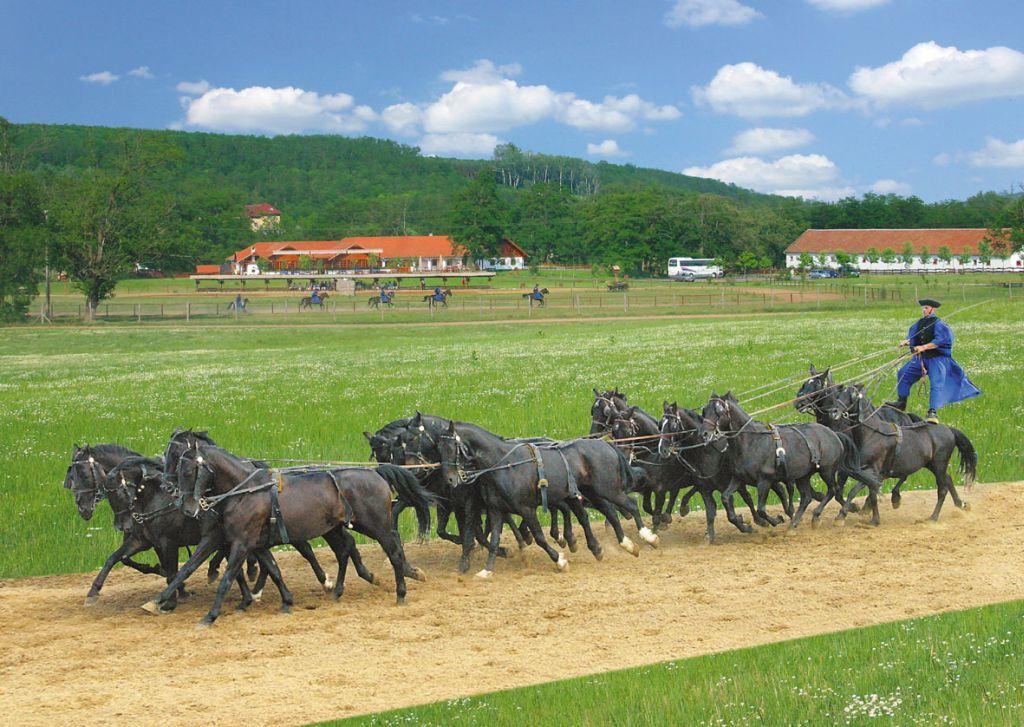 Wrangler, Hungary