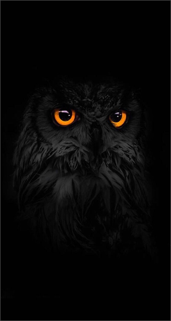 Iphone Wallpaper Own Картины животных Ночная сова