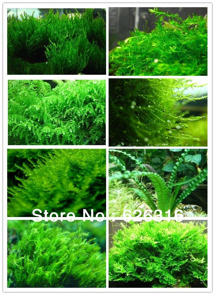 16 kinds of moss plant seed Combination for each 20pcs Aquatic