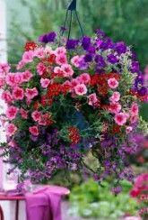 Basket Mix Purple Haze-Plants Buy 1 Get 1 FREE!