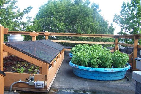 Using a kiddie pool as a container garden cheap and easy for Pool garden restaurant nairobi