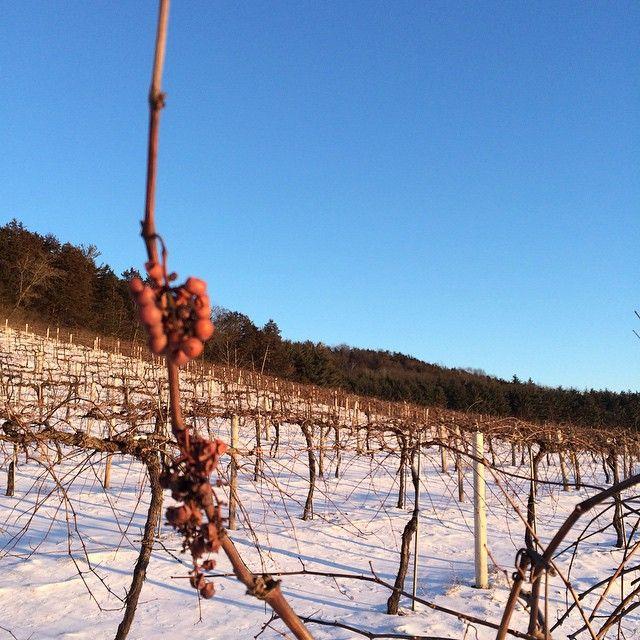 Wollersheim's Vineyard