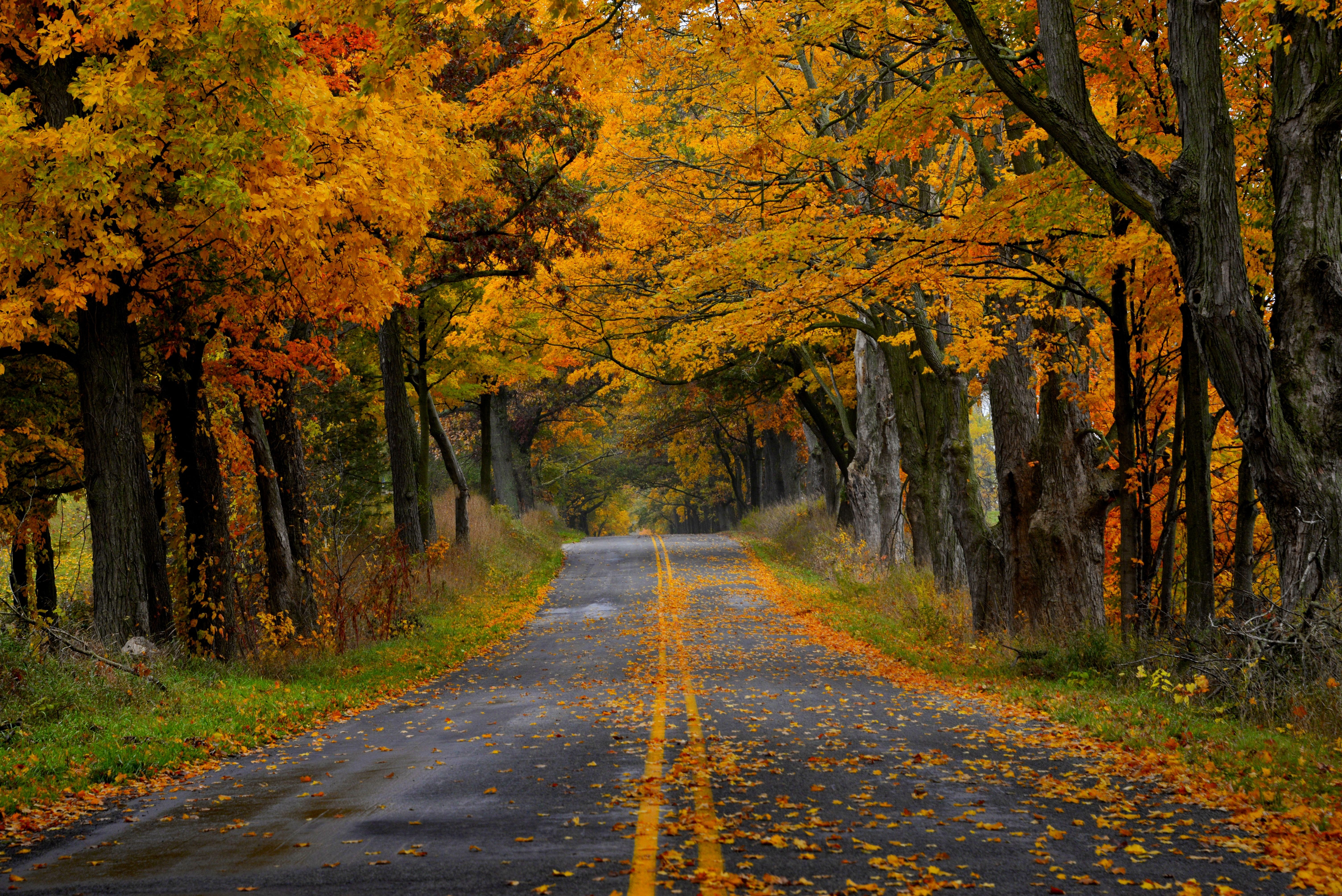 Fall Leaves Photography Wallpaper Narrow autumn road | P...