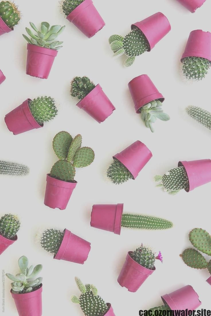 Cactus in 2 container  Weddings bridal shower baby   Etsy