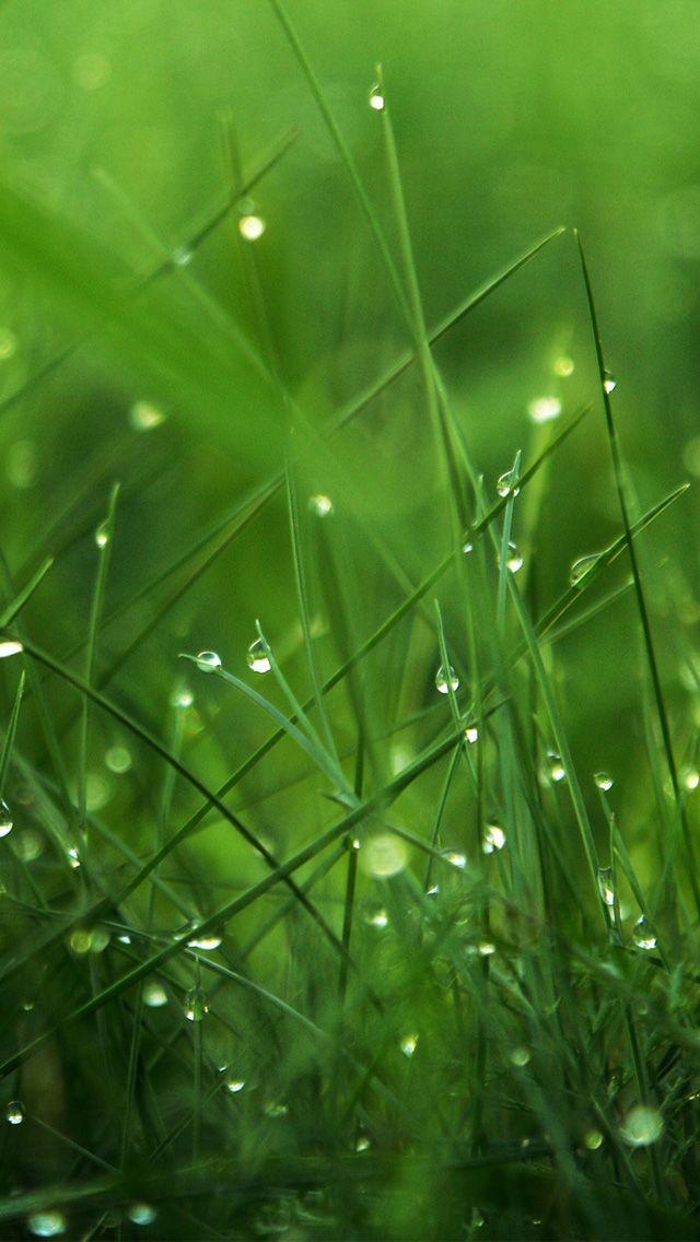 Dew On Grass Iphone Wallpapers Iphone Wallpaper Green Rain Wallpapers Grass Wallpaper