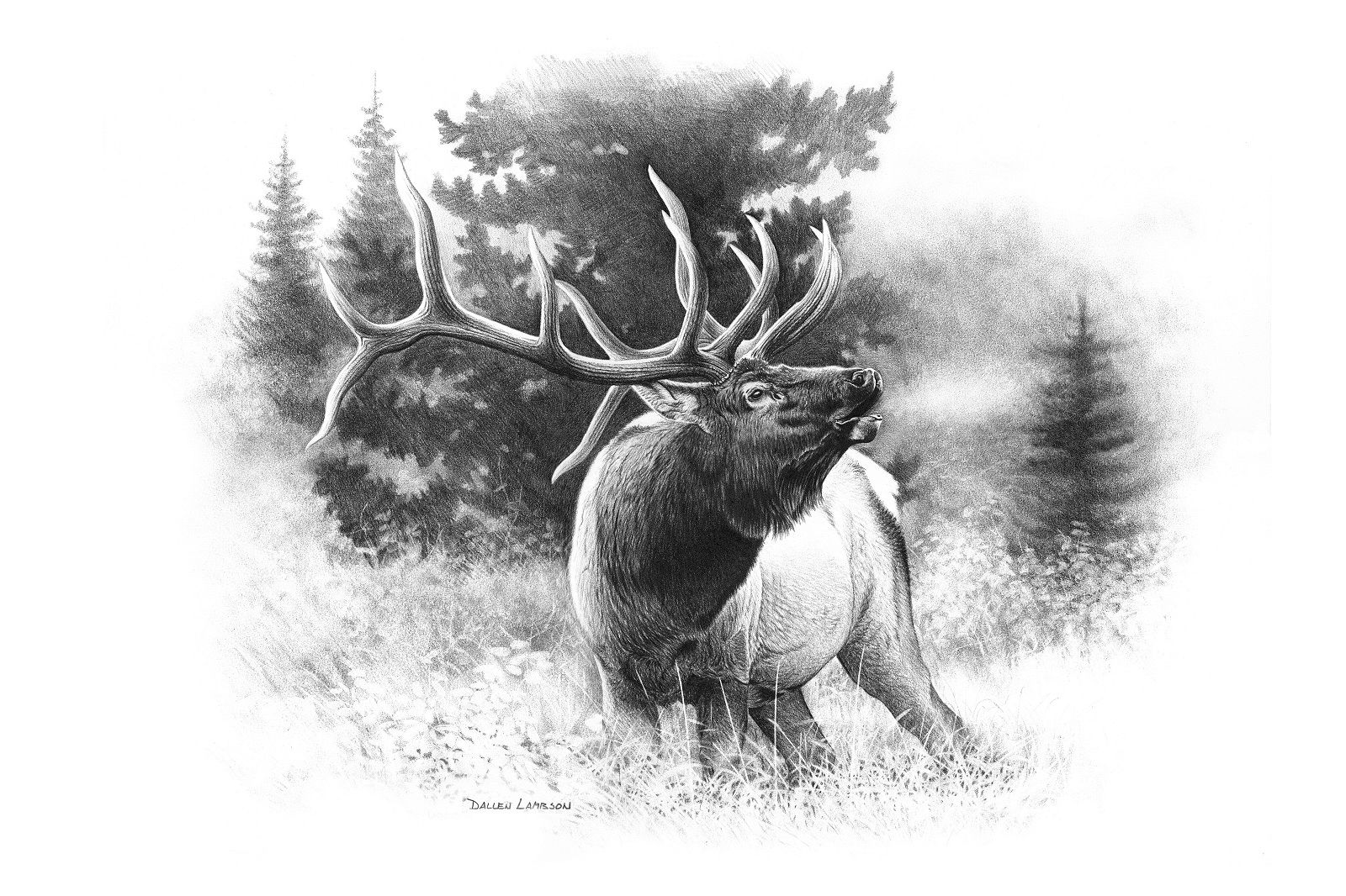 Elk Antler Drawing - Google Search
