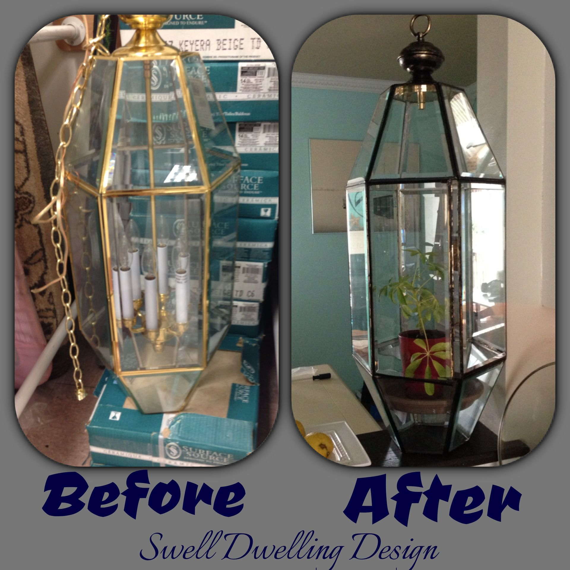 Old ugly brass light fixture turned into a terrarium outback of