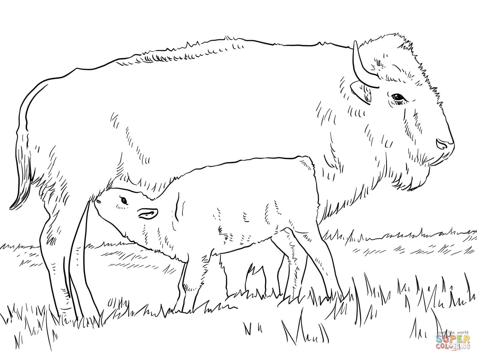 image result for european bison coloring pages with