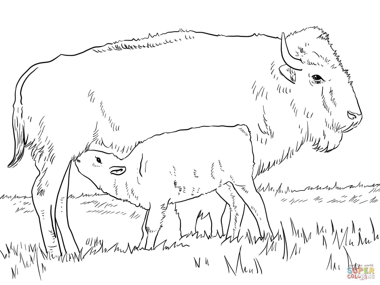 Image result for european bison coloring pages | Belarus | Pinterest