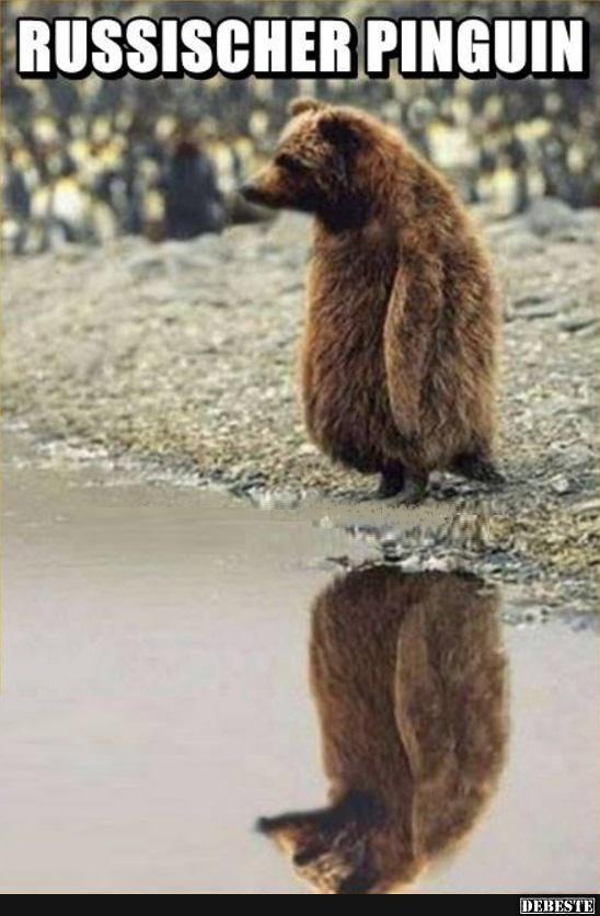 Russischer Pinguin | Lustige Bilder, Sprüche, Witze, echt ...