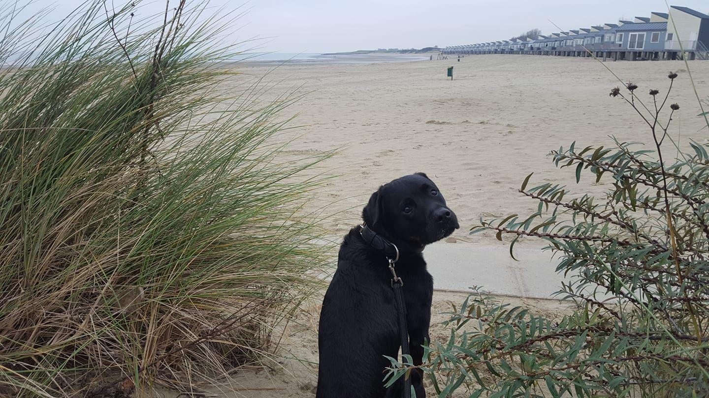 Zeeland Holland Danke An Jaqueline Fur Das Bild Holland Hundefreundlich Hundestrand Niederlande Hundeurlaub Zeeland Hundestrand Urlaub Mit Hund Hunde