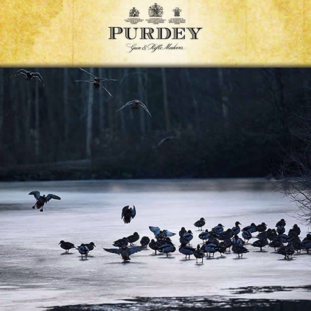 The annual 2015 Purdey Awards for Game and Conseravtion.. Read the full articles in FRL Shooting News. http://ift.tt/1JNynCR #Purdey #Awards #Game #Conservation #RedGrouse #Shooting #FRL #ShootingNews
