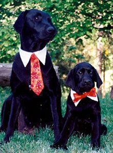 Dapper Dog Ties Dress Up Your Dog Dapper Dogs Dog Tie Dogs