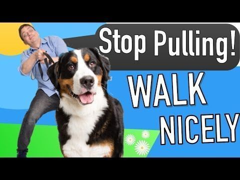 How To Teach Your Dog Not To Bark Humanely And Effectively 3