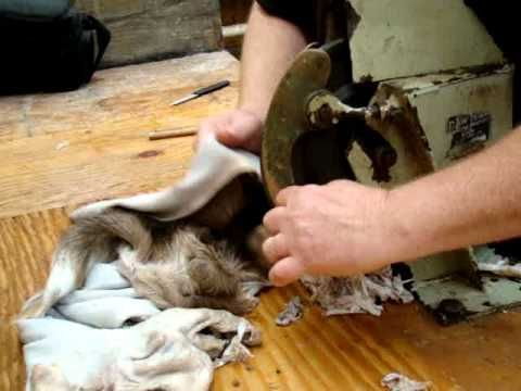 Shaving deer cape - YouTube