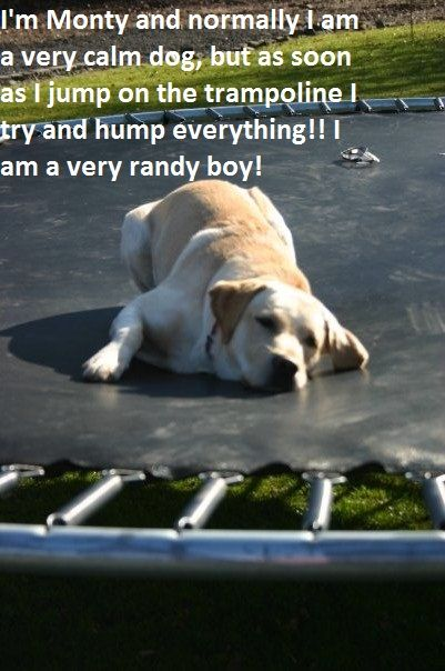 I am Monty I am normally a very calm dog but as soon as I get on the Trampoline (my favourite place) I hump EVERYTHING. I am a very randy boy.