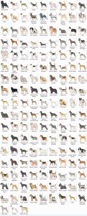 Medium Dog Breeds Chart Top Pictures Gallery Online