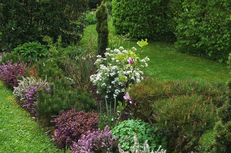 Chez Zeph - Un petit jardin du Nord-Isère: Blancheurs d\'AvrilQuant ...