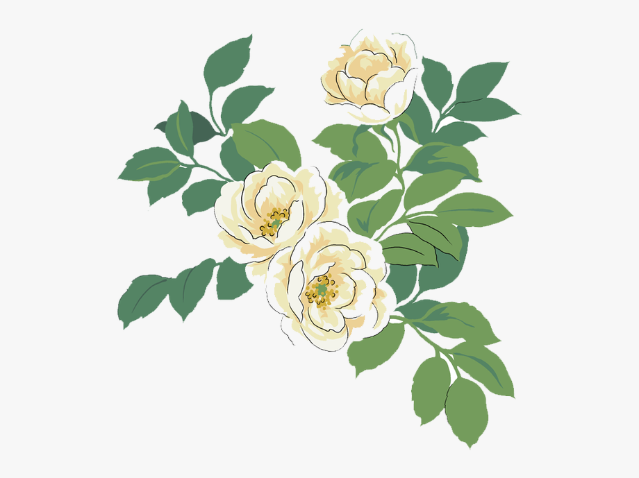 Camellia Tattoo Option In 2020 White Flower Png Painting Illustration Watercolor Paintings