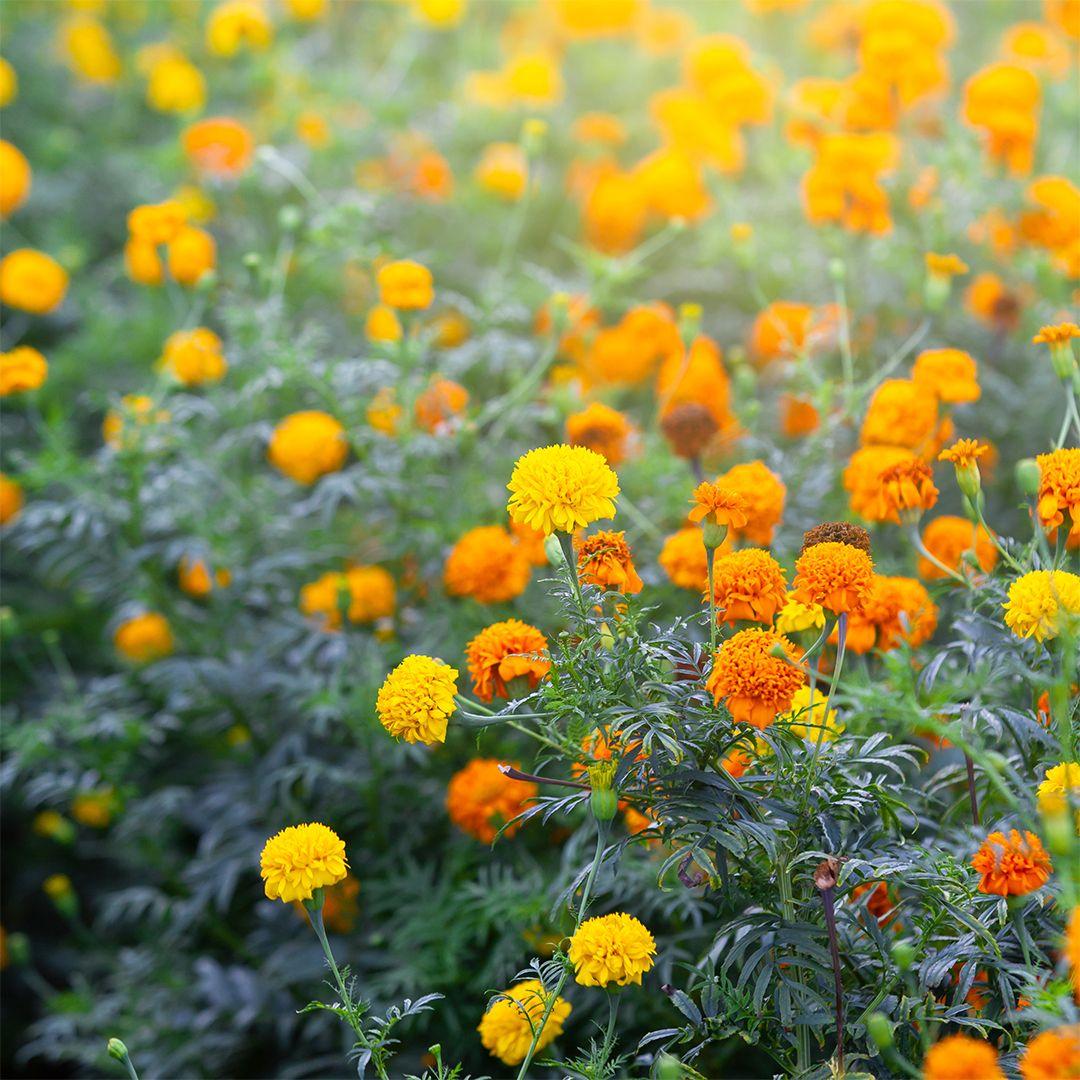 13 plants Flowers articles ideas