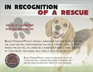 Arme S Beagle Freedom Project