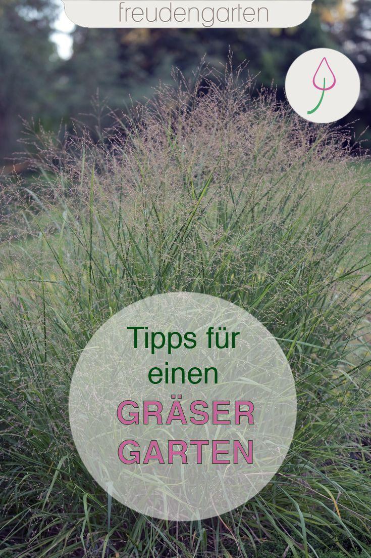 Ziergraser Fur Den Garten Garten Gestalten Graser Im Garten Und