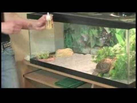 How to Care for Box Turtles : Box Turtle Diet - Nice Looking Turtle Terrarium Habitat Cage, For A Box Turtle
